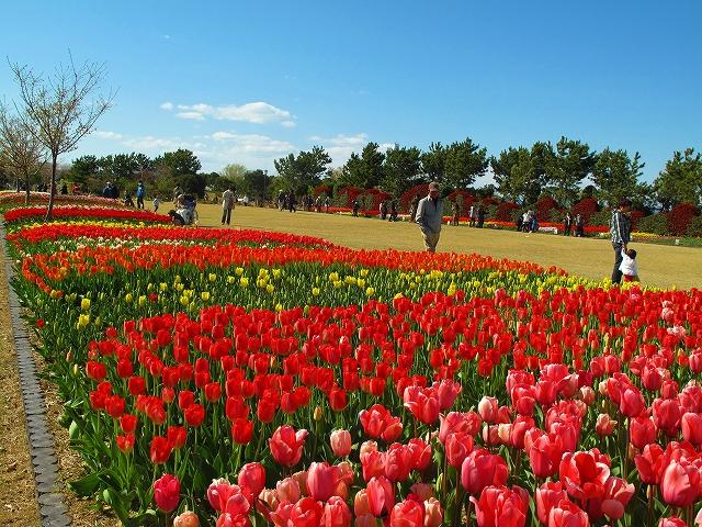 県営吉田公園(吉田町)